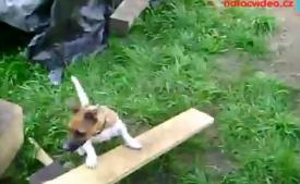 NÁVOD: Jak utahat psa bez jediného pohybu!