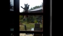 VIDEO DNE: Víme kde se vzal Spiderman! Tady je kočičí předloha!