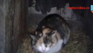 VIDEO DNE: Tohle vypadá na ptačí koťata! Máma kočka sedí na vejcích!