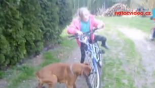 VIDEO DNE: PES ZAKOUSL KOLO! Majitelka si nevzala helmu!