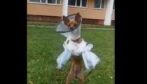 TOHLE VÁS POLOŽÍ! Válečný veterán v kůži psa! VIDEO DNE..