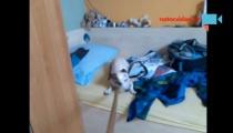 TOHLE JSTE JEŠTĚ NEVIDĚLI! Pes fotbalista, plivající lama a bázlivé psisko
