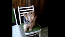 NEUVĚŘÍTE! Pes promluvil v Diváckých zprávách!