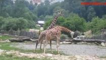 NA VÝLETĚ V JIHLAVSKÉ ZOO. Exotická zvířata i ukázky výcviku dravých ptáků